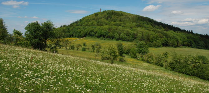 Pfingstmontag, 10. Juni: Naturerlebnis Geisingberg!
