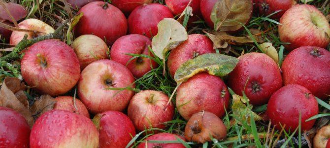 Apfelernte-Wochenende