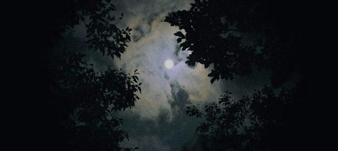Nachtwanderung im Naturschutzgebiet Schwarzbachtal Dippoldiswalde