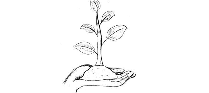 Endlich mal etwas Neues im Garten – Samentauschbörse