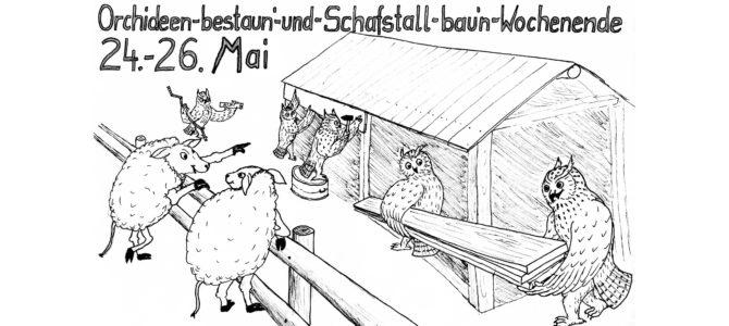 24.-26. Mai: Orchideen-bestaun'-und-Schafszaun-bau'n- Wochenende 2019 – Bliemln beäugen und Brettelbude basteln