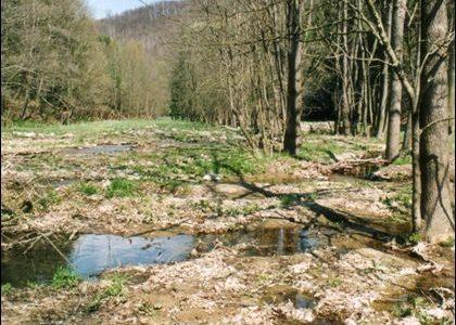 NATURA 2000 Gebietsbetreuung: Trebnitztal (041E)