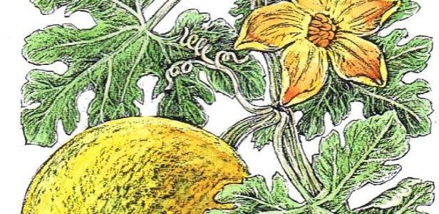 Die besondere Rolle der Pflanzenzeichner gestern und heute – Ausstellung im Botanischen Garten Schellerhau