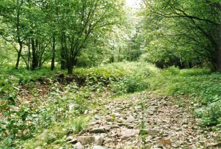 NATURA 2000 Gebietsbetreuung: Bahrebachtal