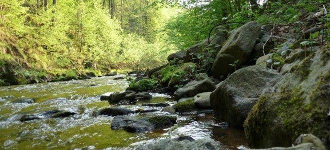Natur(a) lebendig – Das FFH-Gebiet Müglitztal – Naturkundliche Führung durch das herbstlich bunte Müglitztal