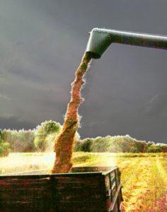 Getreideernte auf der Johannishöhe