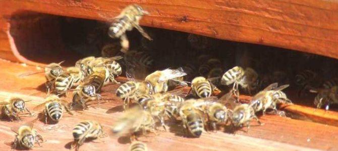 UPDATE: Bienenkurs auf der Johannishöhe verschoben