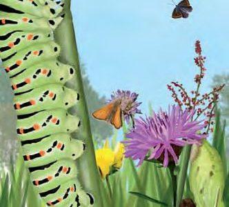 """Vortrag """"Wiesen mähen, aber richtig – Auswirkungen unterschiedlicher Mahd auf die Insekten"""" von Dr. Matthias Nuß"""