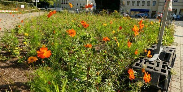 Blühende Wiesen, Kräuter und Stauden sind Nahrung und Nistplätze – Teil 1