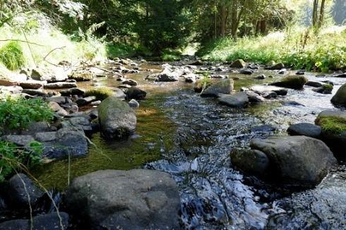 Naturkundliche Führung ins wildromantische Müglitztal