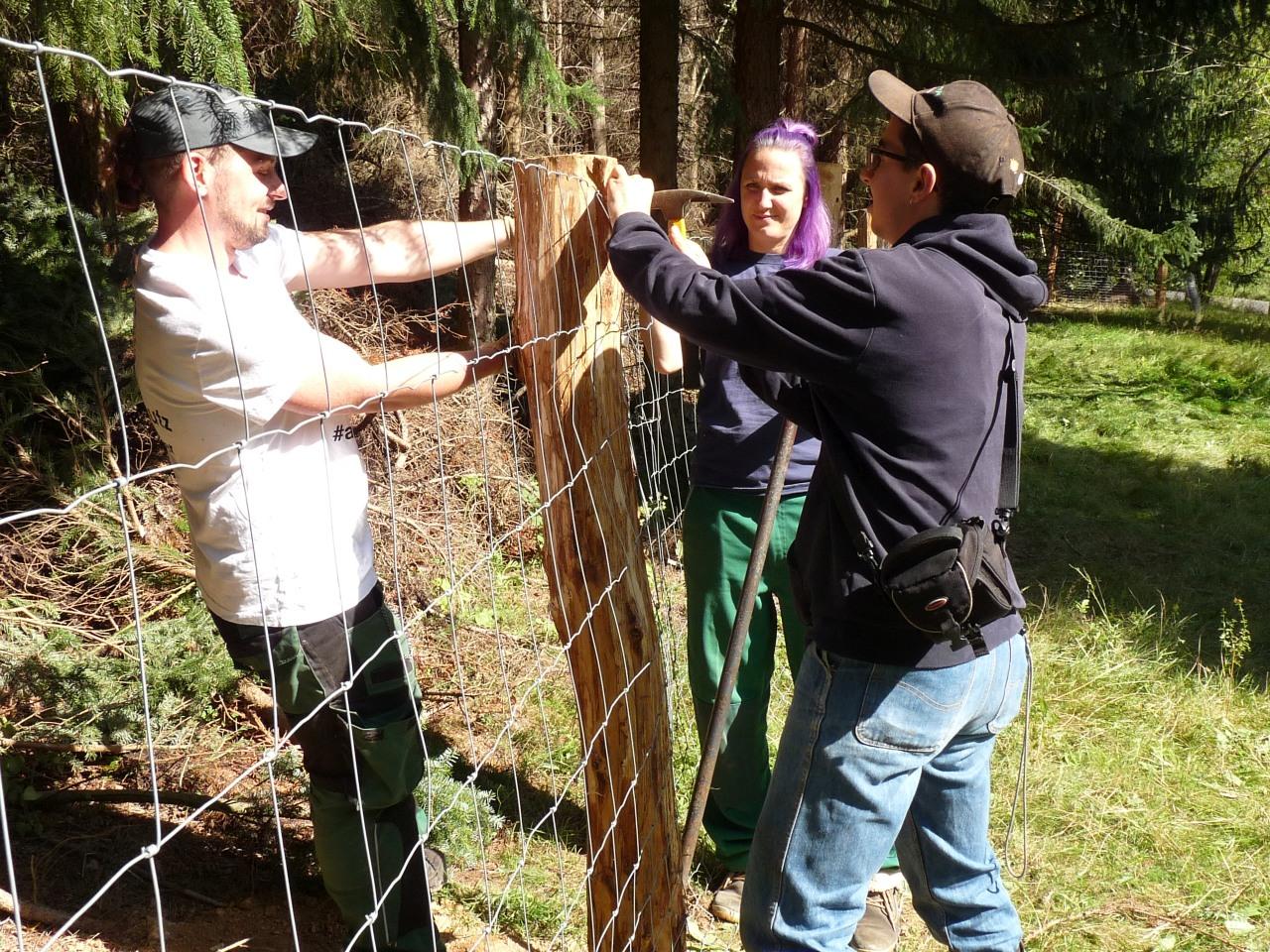 Landschaftspfleger bauen wolfssichere Winterkoppel für Bielatal-Biotoppflegeschafe