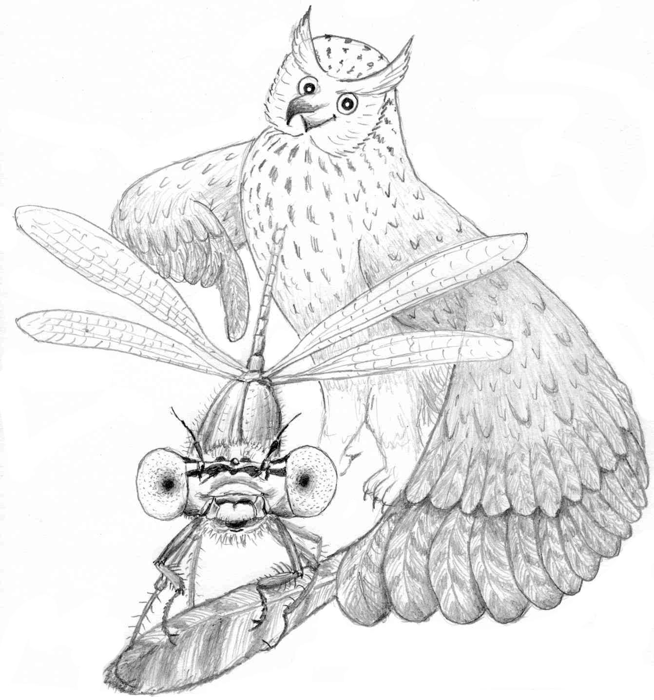 Libellen – Urzeitjäger der Lüfte