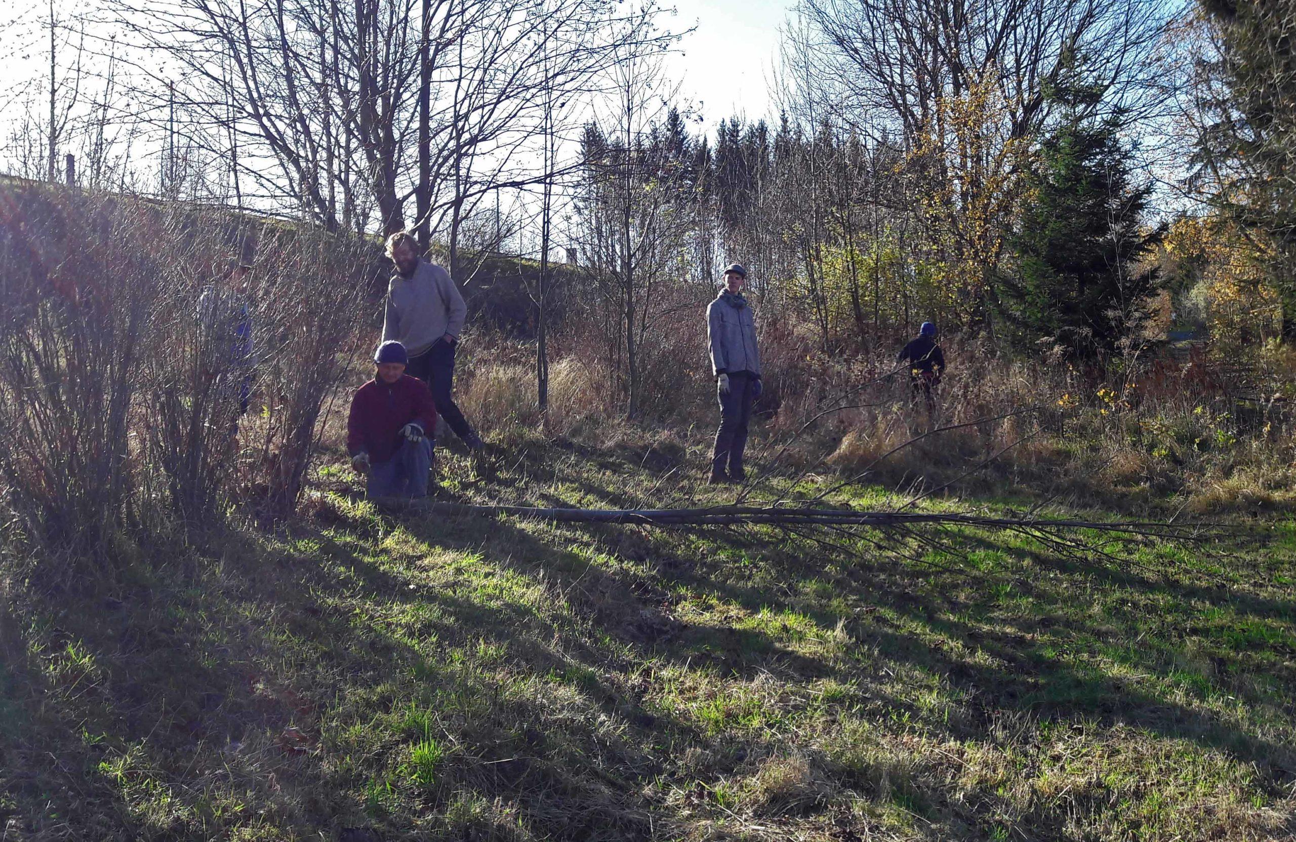 ein kleiner November-Naturschutzeinsatz am Geisingberg …