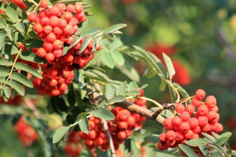 Know-how für Pflanze, Tier und Mensch: Das Jahr in der Naturschutzstation Osterzgebirge