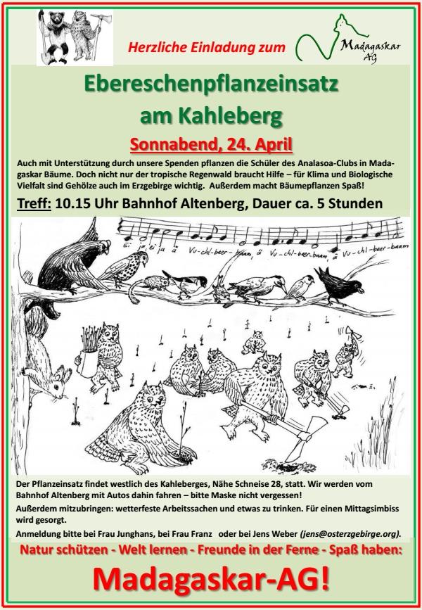 Die Altenberger Madagaskar-AG lädt ein: Ebereschen-Pflanzeinsatz am Kahleberg, 24. April