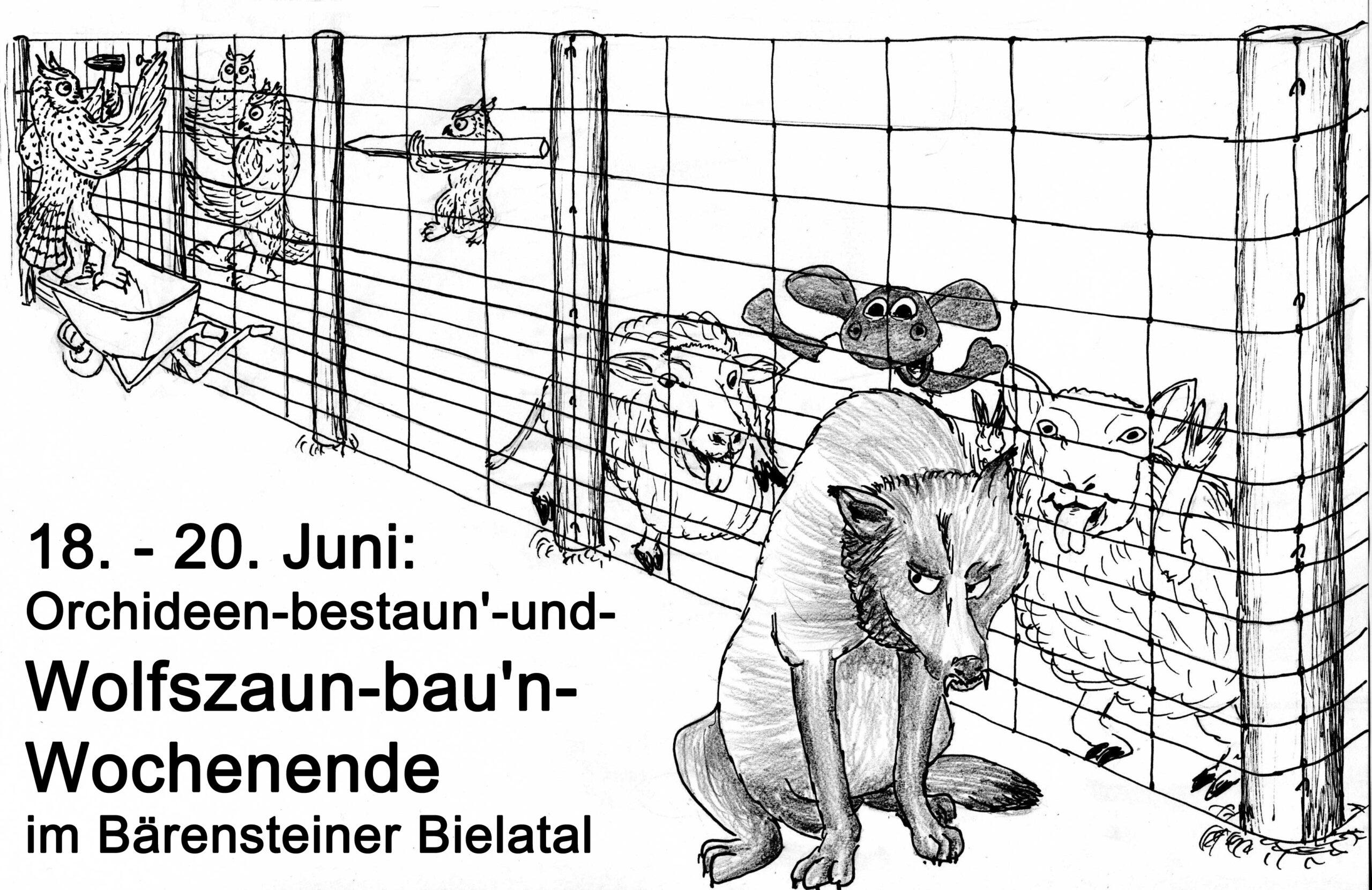 18. – 20. Juni: Orchideen-bestaun'-und-Wolfszaun-bau'n-Wochenende