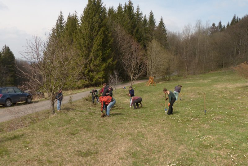 Naturschutzeinsatz am 30. April mit Forstlehrlingen des Forstbezirkes Bärenfels (Sachsenforst) und Kollegen der Naturschutzstation Osterzgebirge