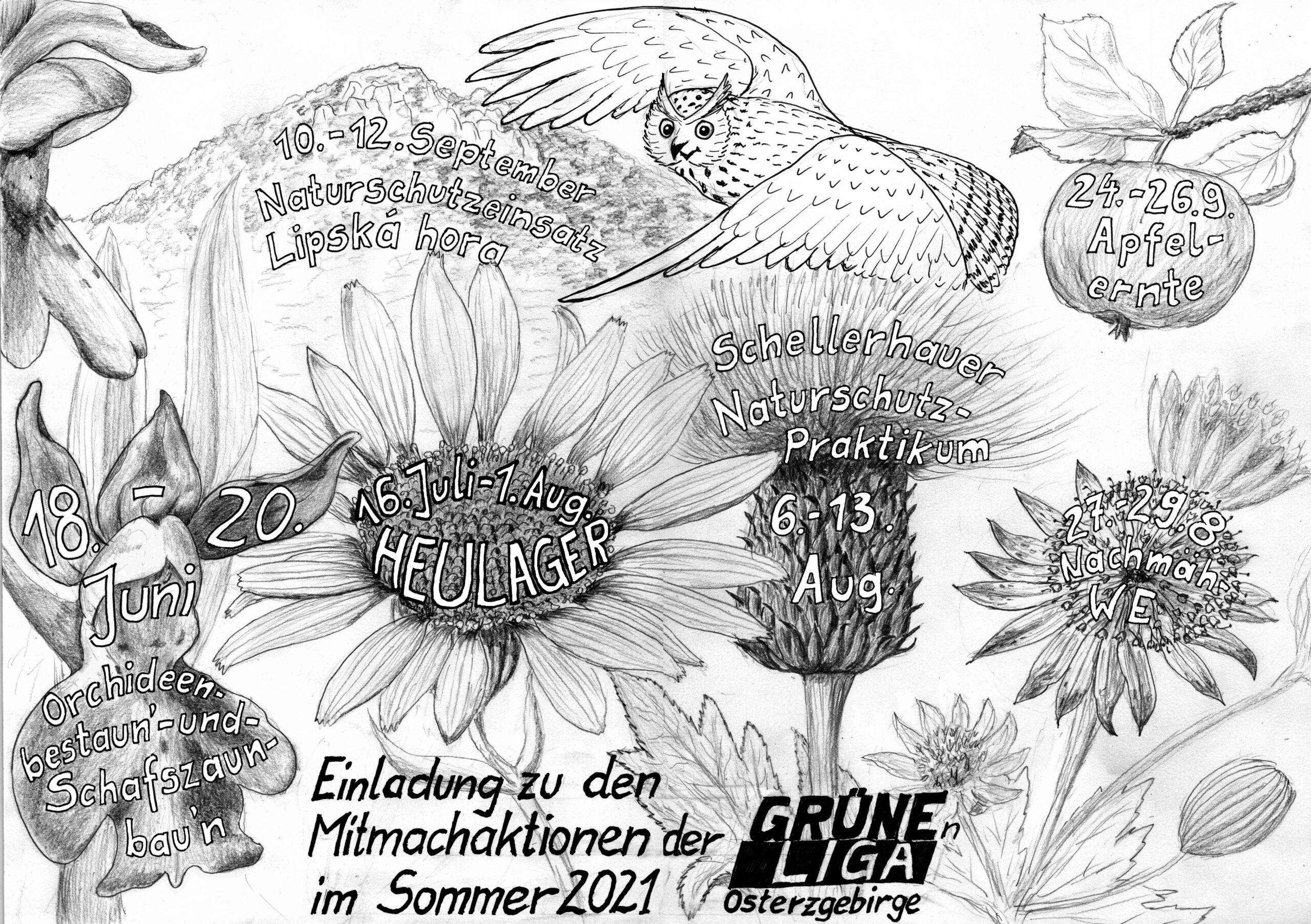 Naturschutzeinsätze der Grünen Liga Osterzgebirge im Sommer 2021