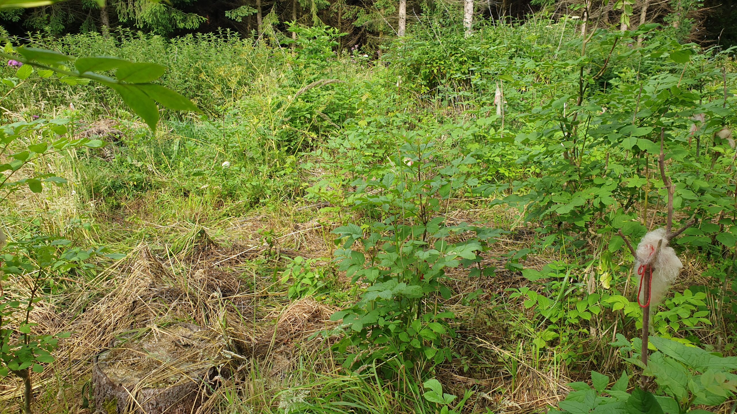 Hilfen zur Wieder-Bewaldung