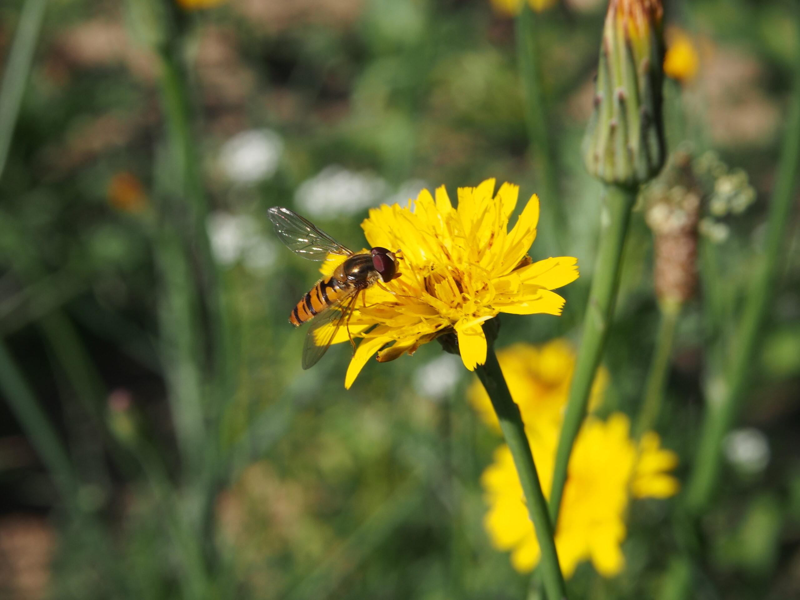 Bienen und Bauern retten! Schluss mit Pestiziden! – Bitte Unterschriftenkampagne unterstützen